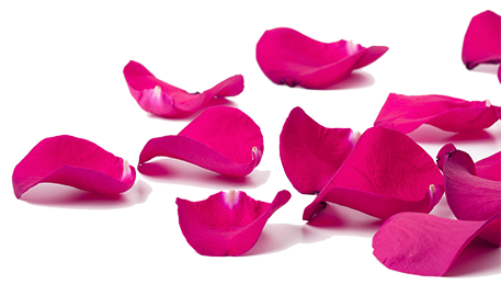 Image of rose petals.